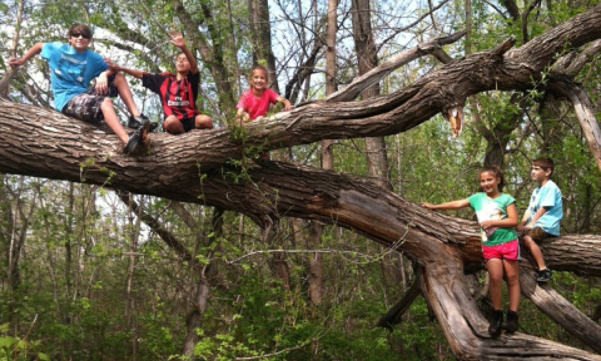 Climbing trees and other natural play will be a feature of Pateros Creek